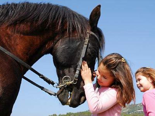 Путёвки в детский ковбойский лагерь в Турции!